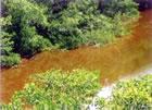 Природный биотоп с «черной» водой